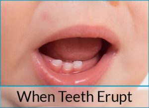 when teeth erupt